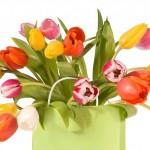 Tulpes-4